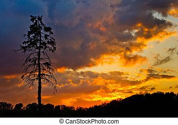 fenyőfa, és, színes, ég