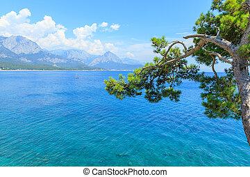 fenyőfa, képben látható, the mediterranean tenger, alatt, kemer