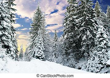 fenyőfa, tél, erdő