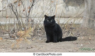 Feral Black cat on ground, winter time