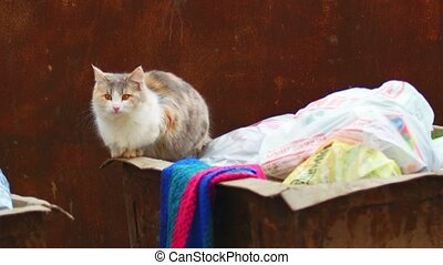 Feral calico cat on trash can