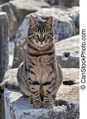 Feral Cat in the ruins of Ephesus, Turkey