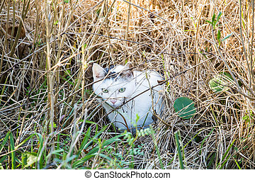 Feral Cat in Wetland Marsh - A feral cat hunting in the...