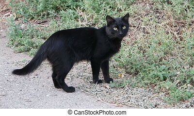 Feral Cat standing on street ready to go in green grass for...