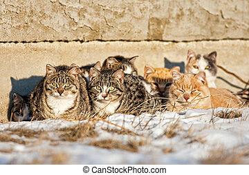 Feral Cats - A group of feral cats huddled together to keep...