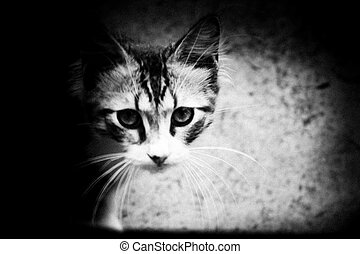 Feral kitten with striking markings staring forward