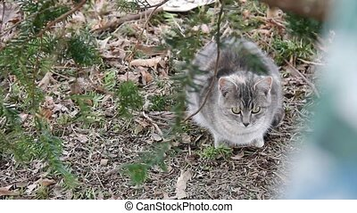 Feral Kitty - Feral kitty sitting in dried leaves.