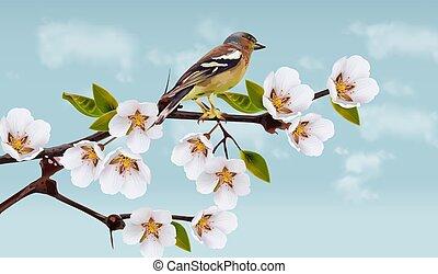 feriado, primavera, blossom., cereja, cartões, flores, borda