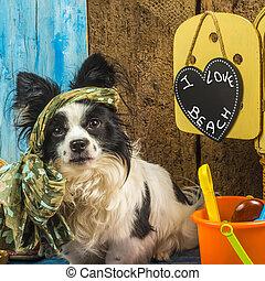 feriados verão, engraçado, cão