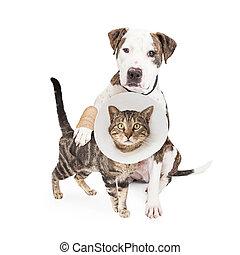 ferido, cão, e, gato, junto