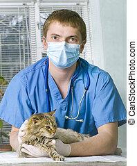 ferido, gato, tratados, veterinário