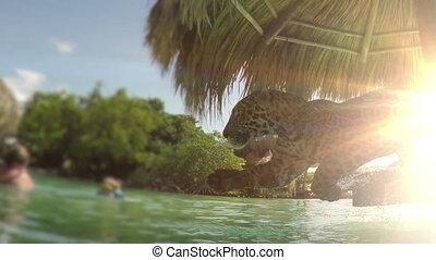 fermé, palapa, exotique, recours, sauter, jaguar, plage