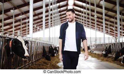 ferme, étable, laitage, paysan, vaches, ou, homme