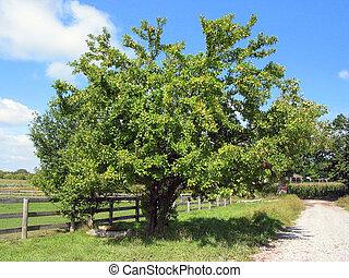 ferme, arbre, pomme