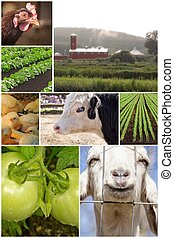 ferme, collage, animal