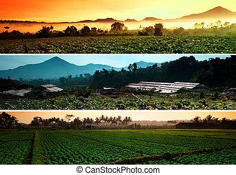 ferme, collage, beatiful, paysage