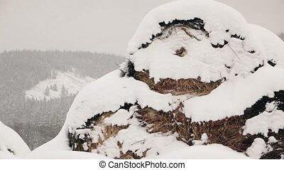 ferme, foin, sous, hiver, neige