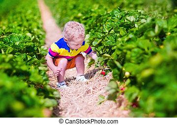ferme, fraise, cueillette, frais, enfant