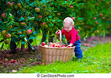 ferme, garçon, peu, panier, pomme