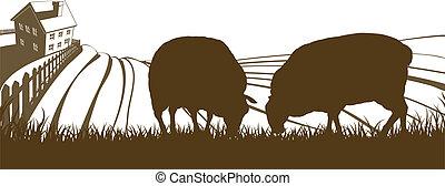 ferme mouton, collines, paysage