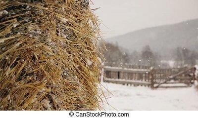 ferme, neige, meule foin, hiver, sous