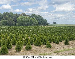 ferme, pays, grand arbre