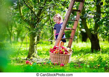 ferme, peu, cueillette, pommes, girl