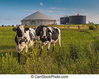 ferme, plante, biogas