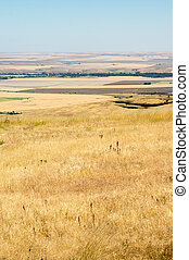 ferme, prairie, terre