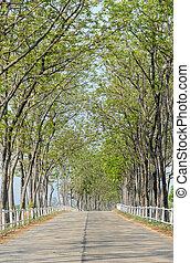 ferme, revêtu, arbre, route