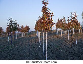 ferme, soir, arbre, automne