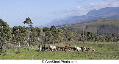 ferme, swellendam, afrique, sud