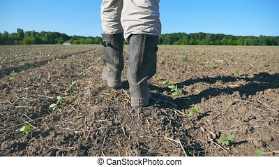 fermier, mouvement, augmenter, pousses, lent, field., bas, meadow., petit, par, angle, marche, mâle, fin, pieds, vue, bottes, tournesol, sec, suivre, vert, jeune homme, jambes, sol