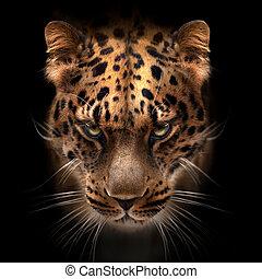 fernöstlich, leopard, gesicht, freigestellt, auf, schwarz