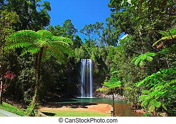 fern albero, e, cascata, in, foresta pioggia tropicale,...