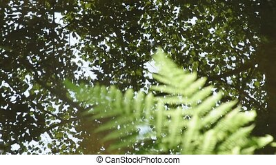 fern at a creek with zzom in and out to the water surface