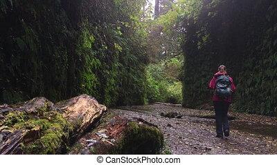 Fern Canyon California - Fern Canyon Prairie Creek Redwoods...