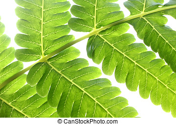 fern close-up