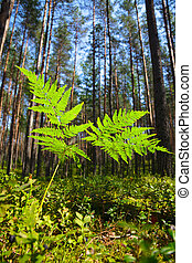 Fern close-up - A fern at sunny summer forest