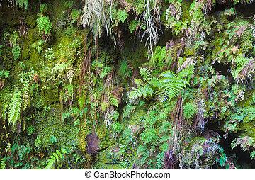 Fern covered wall