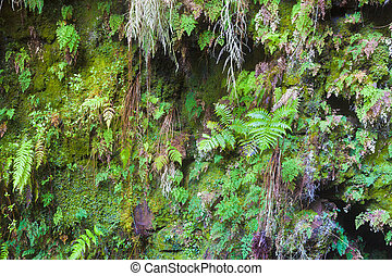 Fern covered wall