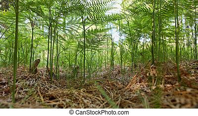 Fern Fantasy Forest