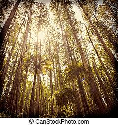 Fern Forest Filtered