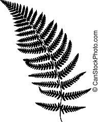 Fern frond black silhouette.