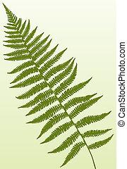 Fern Frond - Single fern frond