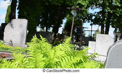 fern grave stone cross - Fern plants, grave tomb stones and...