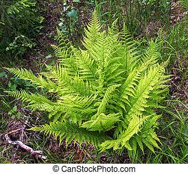 fern green in forest summer