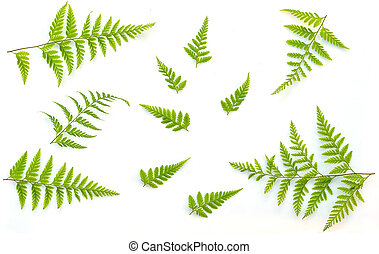 Fern Green leaves texture