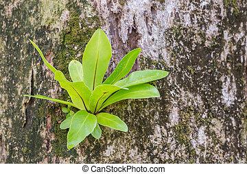 Fern Growing On A Tree
