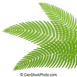 fern., hojas, vector, verde, illustration.